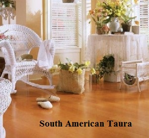 southamerican_taura_1
